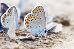 Butterfly family Stock Image