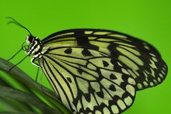 Close-up of a butterfly sitting on the foliage royalty free stock photography