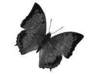 Butterfly fantasy Royalty Free Stock Photo