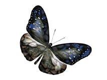 Butterfly fantasy Stock Photo