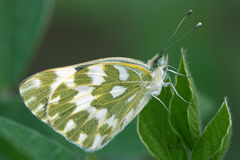 Butterfly features Stock Images