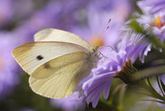 Butterfly feeding on blue flower Stock Photos