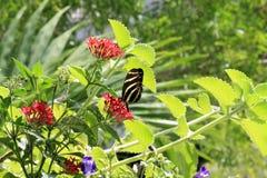 Butterfly feeding Royalty Free Stock Photos