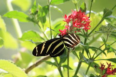 Butterfly feeding Stock Images
