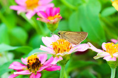 Butterfly feeding on a flower Stock Photo