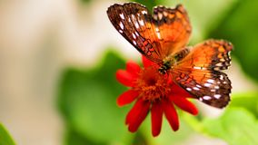 Butterfly feeding on flower in aviary Royalty Free Stock Photography