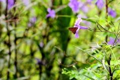 Butterfly feeding in flower Florida Stock Photo