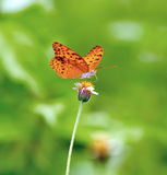 Butterfly feeding on a flower Stock Photography