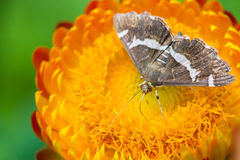 Butterfly feeding on flower Stock Photos