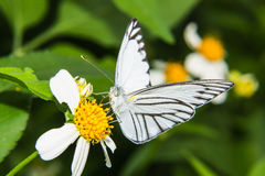 Butterfly feeding on little flower Stock Images