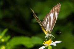 Butterfly feeding on little flower Royalty Free Stock Photos