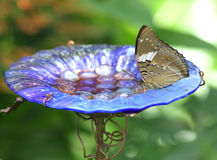 Butterfly feeding at nectar bowl Royalty Free Stock Photos