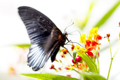 Butterfly feeding out in the garden Stock Photo
