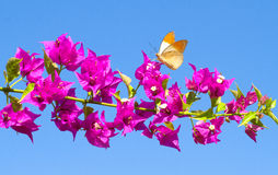 Butterfly feeding from red flowers. Stock Photos