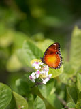 Butterfly feeding on a summer flower against green background Stock Photos
