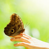 Butterfly on a female hand Stock Images