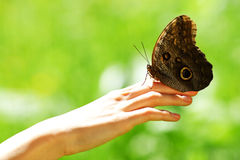 Butterfly on a female hand Royalty Free Stock Images