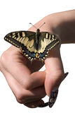 The butterfly and a female hand. Royalty Free Stock Photography