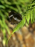 Butterfly on Fern Royalty Free Stock Photography