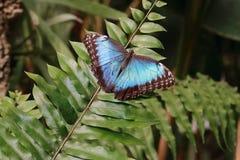 Butterfly on a fern Stock Photo