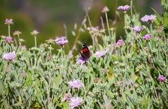 Butterfly among field of little flowers Stock Photo