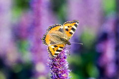 Butterfly on field summer flower, Stock Photos