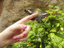 Butterfly on finger. Butterfly perched on woman's finger stock image