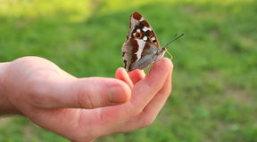 Butterfly on finger Royalty Free Stock Image