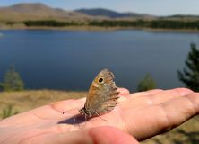 Butterfly on finger. Butterfly standing still on the finger stock image