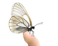 Butterfly on finger Stock Images