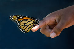 Butterfly first contact Stock Photo