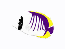 Butterfly fish. A butterfly fish on white Royalty Free Stock Photos