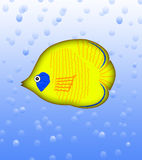 Butterfly fish Royalty Free Stock Photos