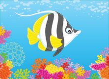 Butterfly fish on a reef Stock Photography