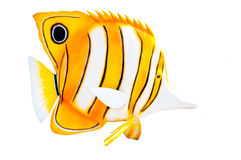 Butterfly fish statue Stock Photos