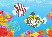Butterfly fish and triggerfish Stock Photos