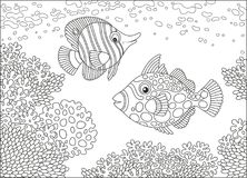 Butterfly fish and triggerfish. A funny butterfly-fish and a clown triggerfish swimming over amazing corals in a tropical sea, a black and white vector Stock Photography