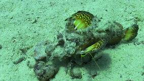 Butterfly Fish on Vibrant Coral Reef stock video