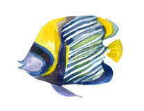 Butterfly fish. Watercolor. Royalty Free Stock Photography