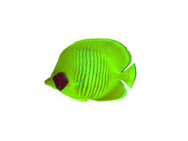 Butterfly fish on a white Stock Image