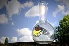 Butterfly in a flask stock photo