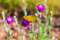 Butterfly flies to flowers meadow, nature background Stock Photography