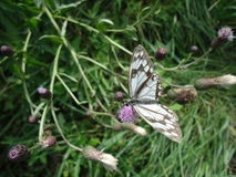 Butterfly. Stock Photography