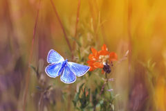 Butterfly flitting over a flower on a summer meadow Stock Photos