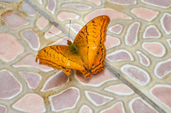 Butterfly on floor. Royalty Free Stock Images