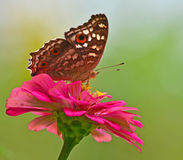 Butterfly. On a flowe  with green nature background Royalty Free Stock Photo