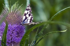 Butterfly on flower. Colorful butterfly on purple flower, green nature background Royalty Free Stock Photography