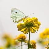 butterfly flower 图库摄影