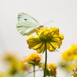 butterfly flower стоковая фотография