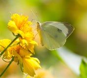 butterfly flower 免版税库存图片
